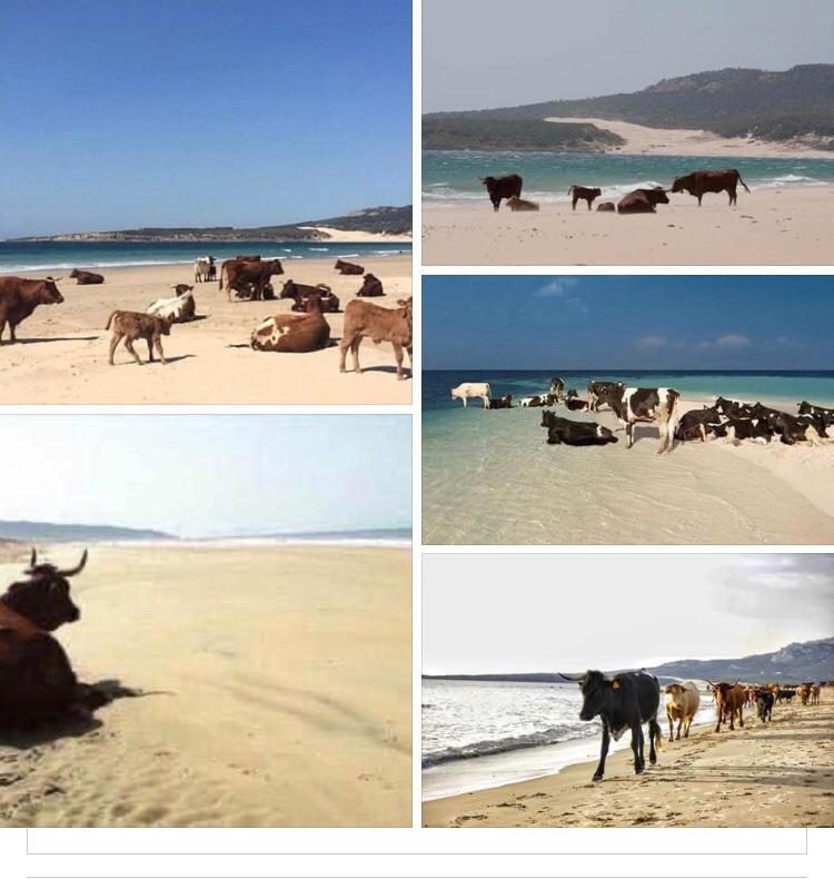 Bolonio bovine paradise - Lion Trust Spain